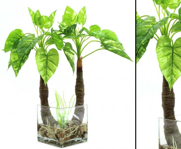 Photos Pflanze im Glas, mit 26 Blätter, Höhe 50cm