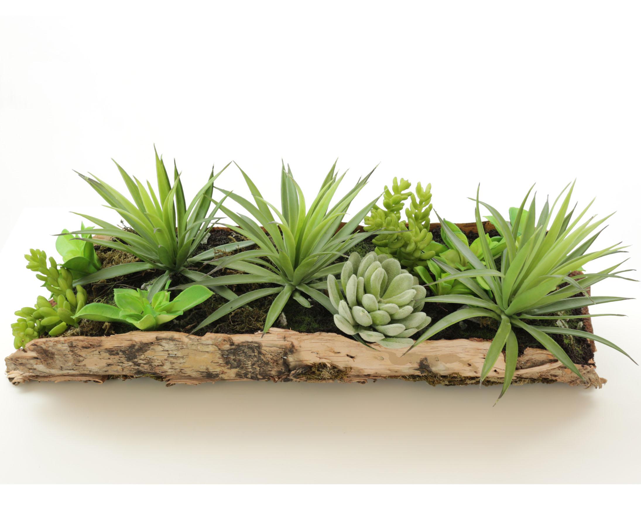 Kunstpflanzen Discount sukkulenten im glas kunstpflanzen sukkulenten im glas dekorieren