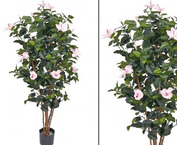 Blütenbaum Hibiskus rosa mit Echtholz Stämmen Höhe 180cm