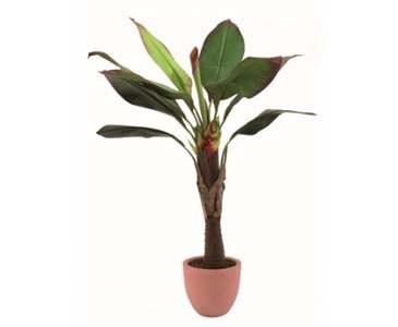 Strelizienstaude, mit 10 Blätter, im Topf, Höhe ca. 140cm
