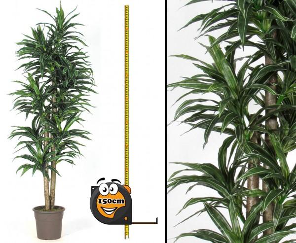 Dracena Kunstpflanze 210 Blättern 150cm hoch 2 Naturstämme