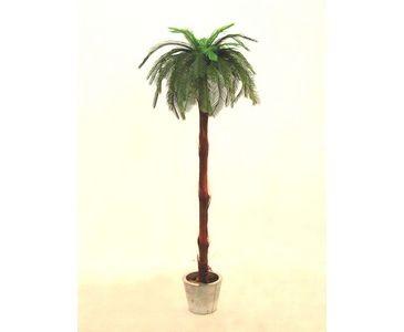 Cycuspalme Höhe ca. 210cm 1fach mit Baststamm