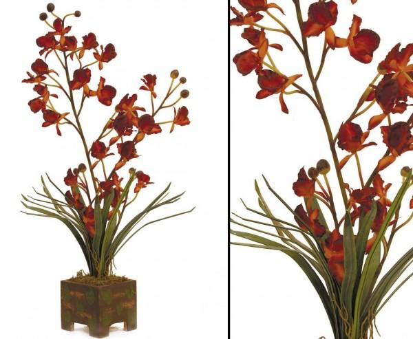 Orchidee Set, Blüten apricot, Höhe ca. 60cm