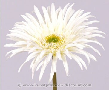 "Gerbera Seidenblume ""Sunshine"", Höhe 20 cm, creme weiß"