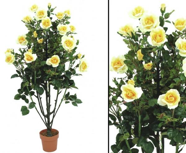 Rosenbusch zartcremig mit Blüten Höhe ca. 140cm mit Topf