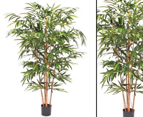 Bambusbaum mit 5 Echtstämme und 1.197 Blätter, 180cm