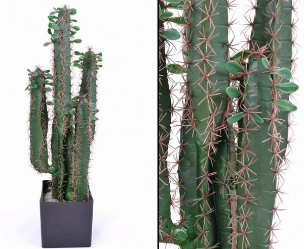 Künstlicher Sukkulenten Kaktus Wolfsmichl 75cm mit Topf