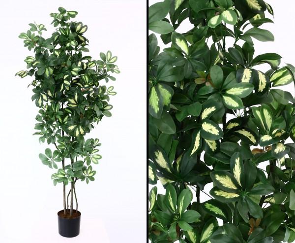 Kunstbaum Schefflera 150cm mit 1058 grün-weiße Blätter