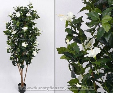 Blütenbaum Hibiskus weiß mit Echtholz Stämme Höhe 180cm