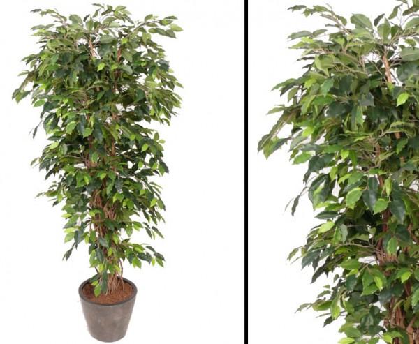 Künstlicher Ficus Benjamini Multistamm Höhe 150cm