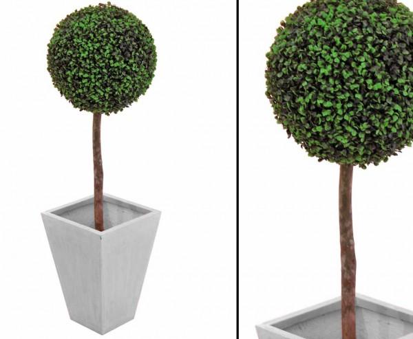 Buchsbaumkugel Buchsbäumchen Höhe ca. 60cm Durchmesser Kugel 30cm