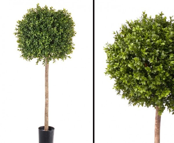 Buchsbaum mit ca.1188 Blättern Höhe ca.105cm Durchmesser ca. 38cm
