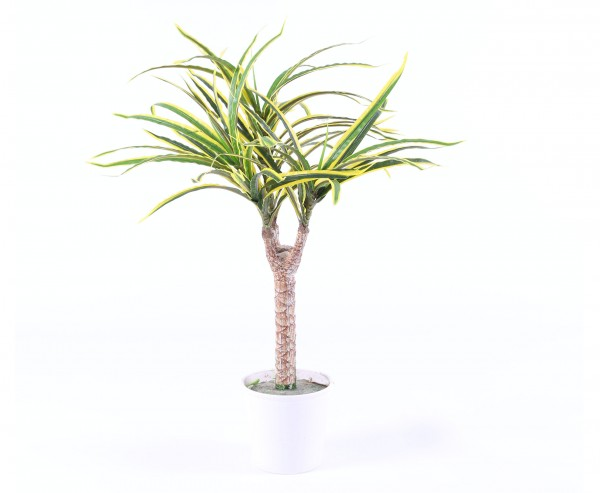 Dracena Kunstpflanze grün-gelbe Blätter 50cm