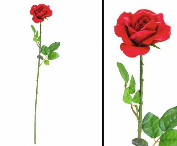 Rose, Blüte offen, langstielig in rot, ca. 60cm