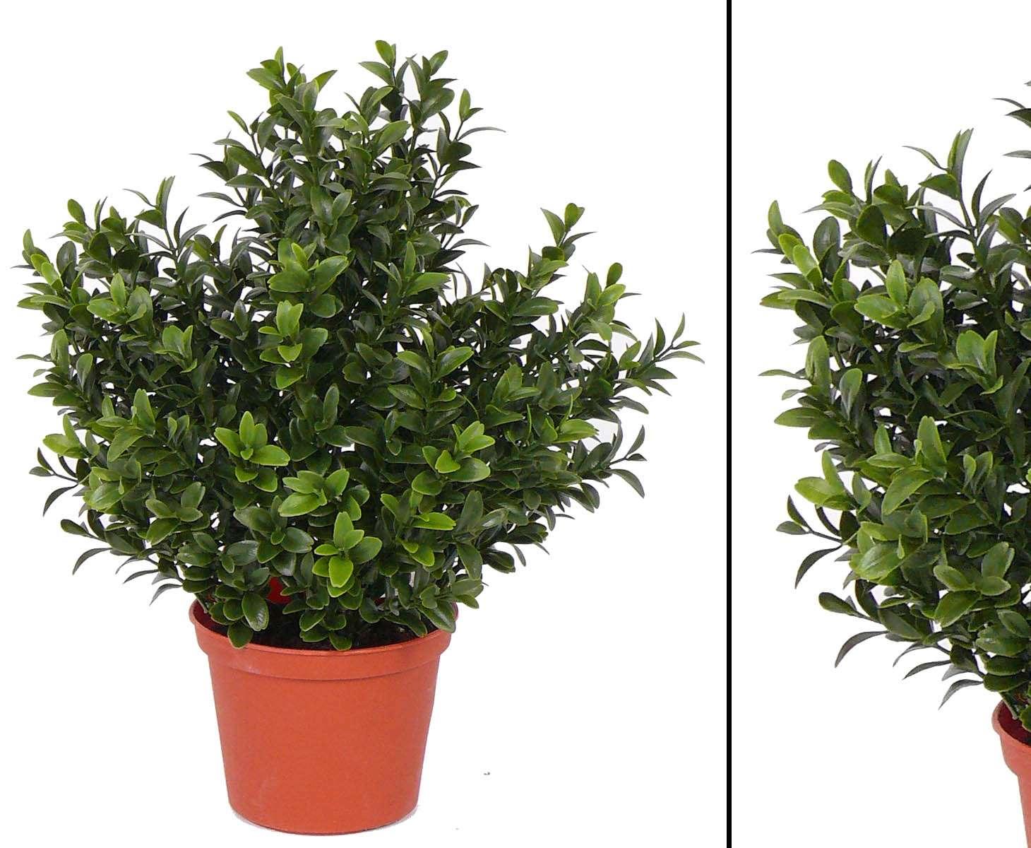 Kunstpflanzen Kaufen Bei Kunstpflanzen Discount Com