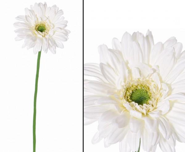 """Gerbera Seidenblume """"Sunshine"""" Länge 63cm, creme weiße Blüte mit 12cm"""
