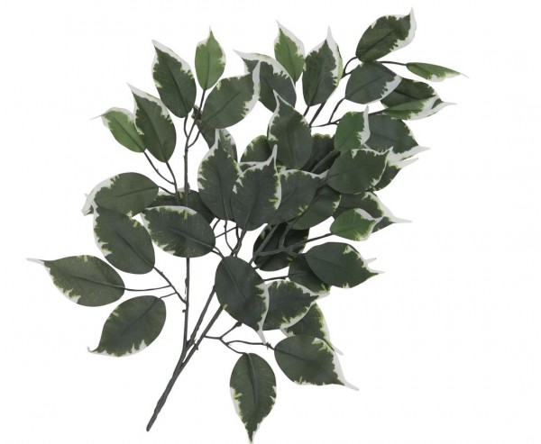 Künstliche Ficus Zweige 53cm mit grün weiße Blätter im 12er Set