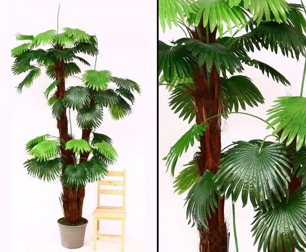 Künstliche Fächerpalme mit 3 Stämme 300cm und 250cm sowie 175cm hoch