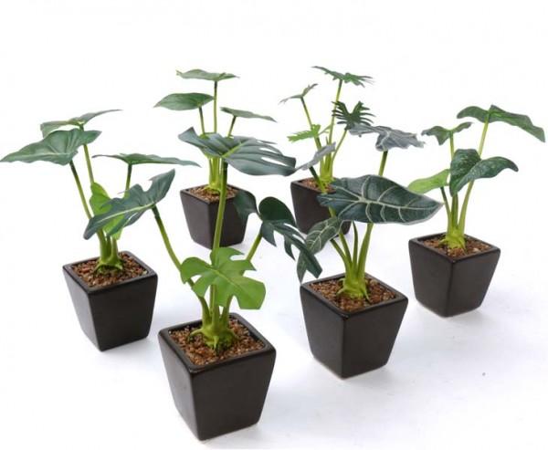 Blattpflanzen Mix aus 6 Kunstpflanzen im Keramiktöpfchen, Höhe ca. 20cm