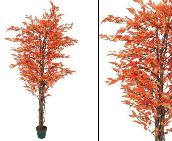 Ficus-Benjamini Multi-Stamm mit orange farbige 1548 Bätter,180cm