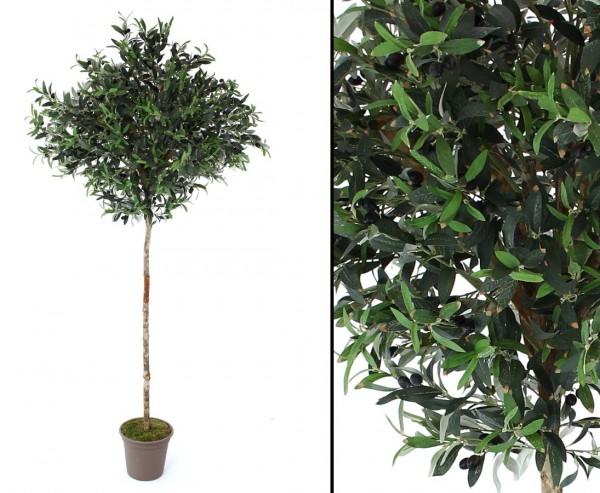 Oliven Kunstbaum mit runder Krone 100cm und Naturstamm, Höhe 200cm