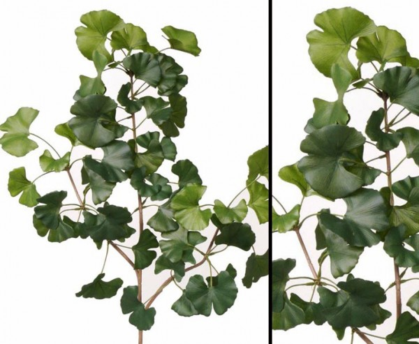 Ginkgo Baum Zweig schwer entflammbar, Länge 70cm